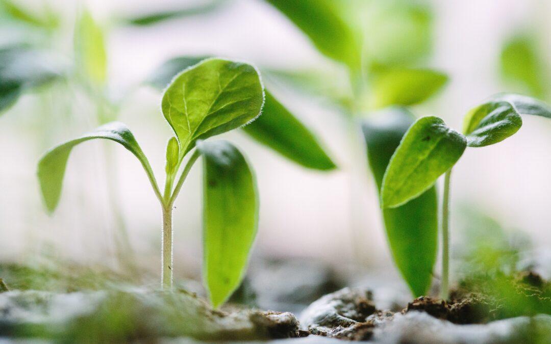 Desiring Growth in Your Faith